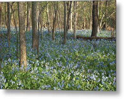 Metal Print featuring the photograph Spring by Heidi Poulin