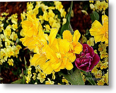 Metal Print featuring the photograph Spring In Dallas by Diana Mary Sharpton