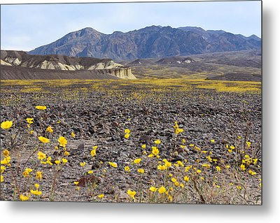 Metal Print featuring the photograph Spring In Death Valley by Dung Ma