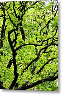 Spring In Green And Black    Metal Print by Sarah Loft