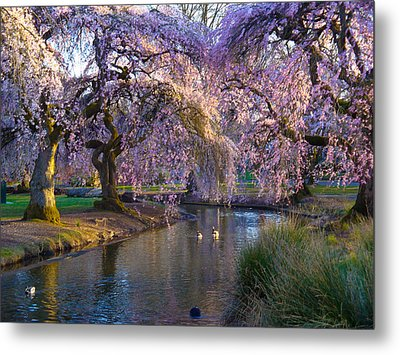 Spring In Portland Metal Print by Craig Perry-Ollila