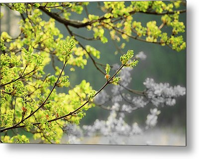 Spring In The Arboretum Metal Print by Joni Eskridge