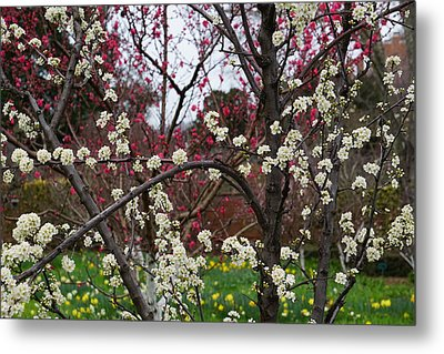 Spring In The Garden Metal Print by YT Photo