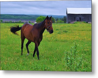Spring In The Pasture Metal Print by Bill Willemsen
