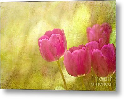 Spring Is In The Air Metal Print by Beve Brown-Clark Photography