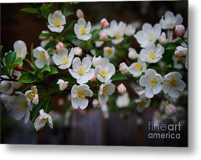Spring Lanscape  Metal Print by Celestial Images