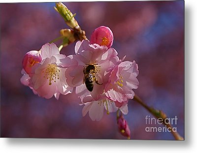 Metal Print featuring the photograph Spring by Louise Fahy