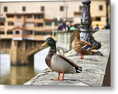 Spring Love Ducks Metal Print