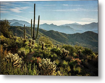 Metal Print featuring the photograph Spring Morning In The Sonoran  by Saija Lehtonen