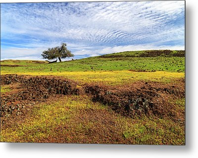 Metal Print featuring the photograph Spring On North Table Mountain by James Eddy