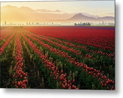 Metal Print featuring the photograph Spring Palette by Ryan Manuel