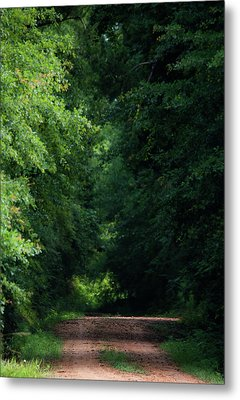 Metal Print featuring the photograph Spring Path Of Light by Shelby Young