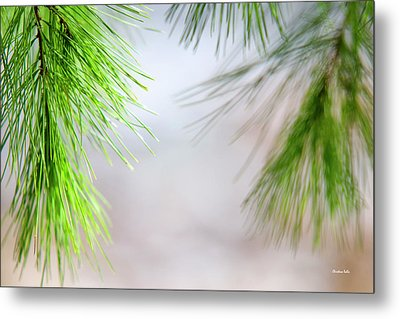 Metal Print featuring the photograph Spring Pine Abstract by Christina Rollo