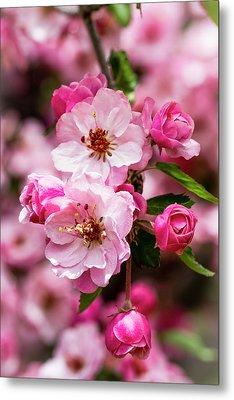 Spring Pink Metal Print by Teri Virbickis