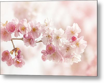 Spring Pinks Metal Print by Jacky Parker