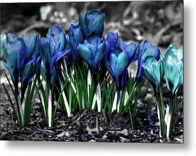 Metal Print featuring the photograph Spring Rebirth by Shelley Neff