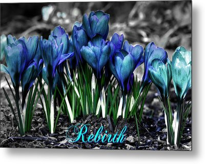 Metal Print featuring the photograph Spring Rebirth - Text by Shelley Neff