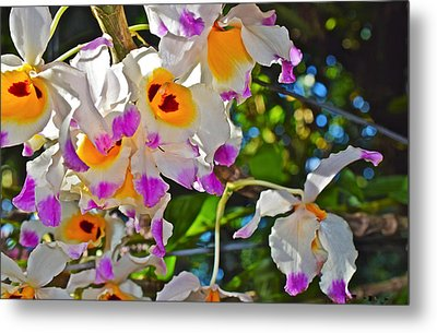 Spring Show 15 Brazilian Orchid Metal Print