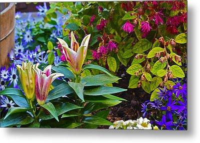 Spring Show 15 Lilies Metal Print