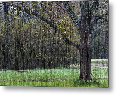 Spring Shower Metal Print