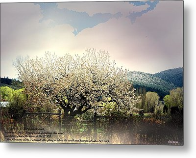 Metal Print featuring the photograph Spring Snow Inspiration by Anastasia Savage Ealy