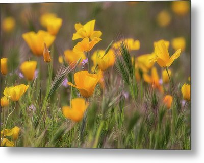 Metal Print featuring the photograph Spring Softly Calling  by Saija Lehtonen