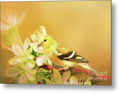 Metal Print featuring the photograph Spring Song Bird by Darren Fisher