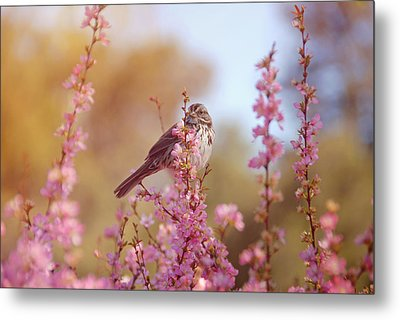Metal Print featuring the photograph Spring Sparrow by Lynn Bauer