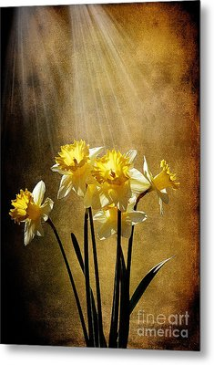 Spring Sun Metal Print by Lois Bryan