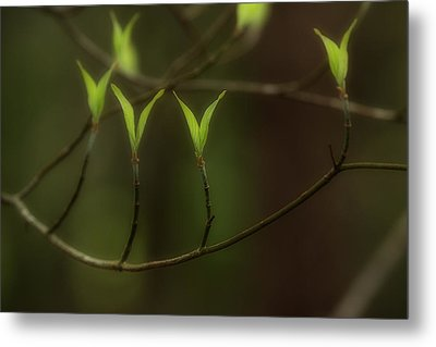 Metal Print featuring the photograph Spring Time by Mike Eingle
