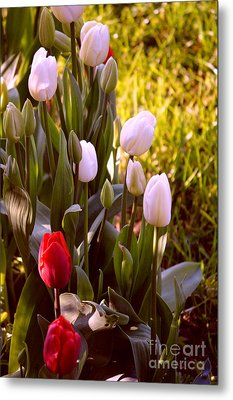 Metal Print featuring the photograph Spring Time Tulips by Susanne Van Hulst