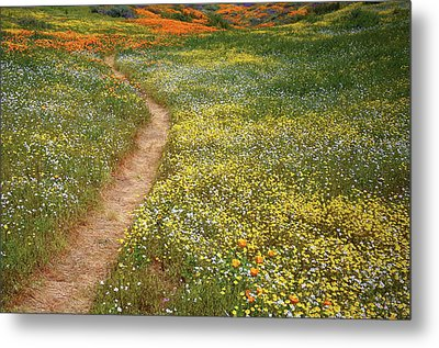 Metal Print featuring the photograph Spring Trail Through A Sea Of Wildflowers At Diamond Lake In California by Jetson Nguyen