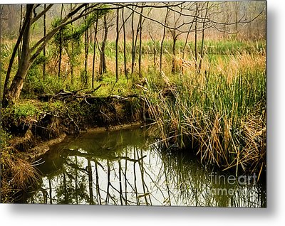 Spring Trees Reflection Metal Print by Iris Greenwell