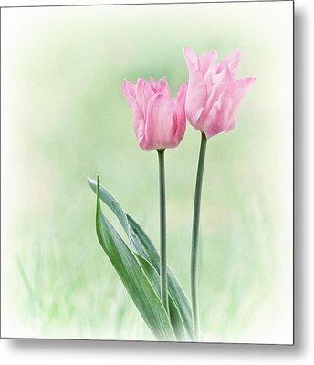 Metal Print featuring the photograph Spring Tulips by Angie Vogel