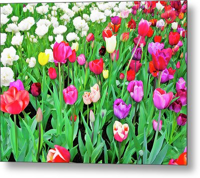 Spring Tulips Flower Field I Metal Print by Artecco Fine Art Photography