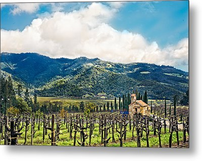 Metal Print featuring the photograph Spring Vines by Kim Wilson