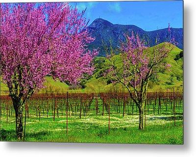 Spring Vineyards And Mt St Helena Metal Print