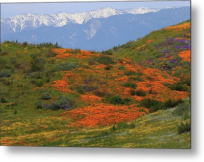 Metal Print featuring the photograph Spring Wildflower Display At Diamond Lake In California by Jetson Nguyen