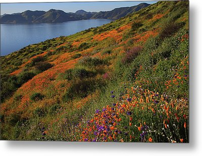 Metal Print featuring the photograph Spring Wildflower Season At Diamond Lake In California by Jetson Nguyen