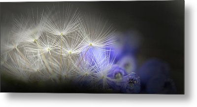 Spring Wishes Metal Print by Kim Henderson