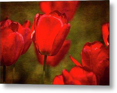 Springing Up Tulips Metal Print by Karol Livote