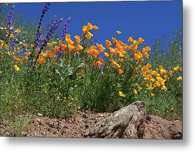 Metal Print featuring the photograph Springtime In Southern California by Cliff Wassmann