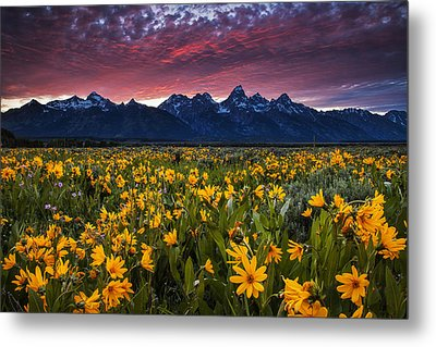 Springtime In The Mountains Metal Print by Andrew Soundarajan