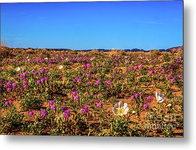 Metal Print featuring the photograph Springtime In The Sonoran Desert by Robert Bales