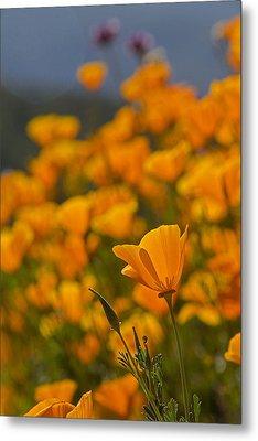 Springtime Poppies Metal Print
