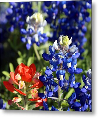 Springtime Texas Colors Metal Print