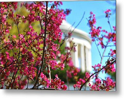 Metal Print featuring the photograph Springtime Vibe by Mitch Cat
