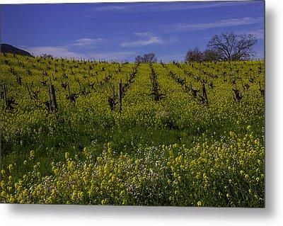 Springtime Vineyards Sonoma Metal Print