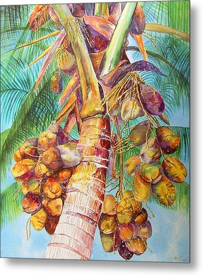 Squire's Coconuts Metal Print by AnnaJo Vahle