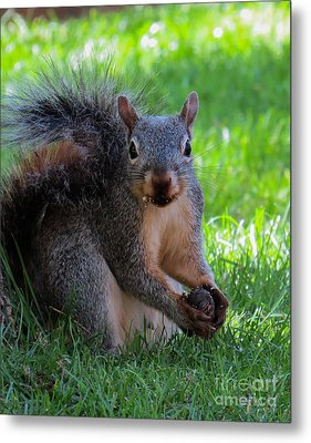 Squirrel 2 Metal Print
